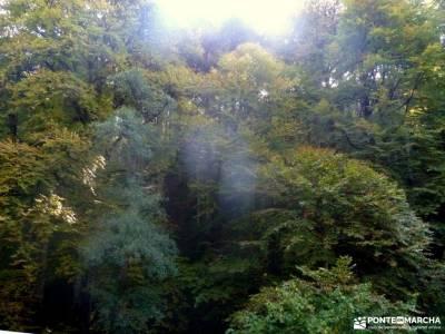Selva Irati-Pirineo Navarro-Puente del Pilar; visitas cerca de madrid viajar con amigos compañeros